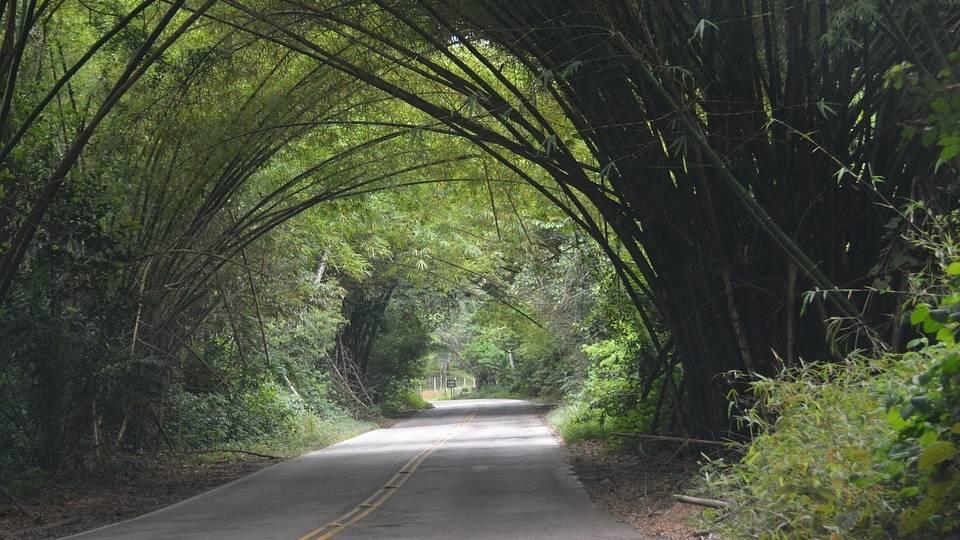Las carreteras, uno de los principales motivos de la fragmentación de los hábitats