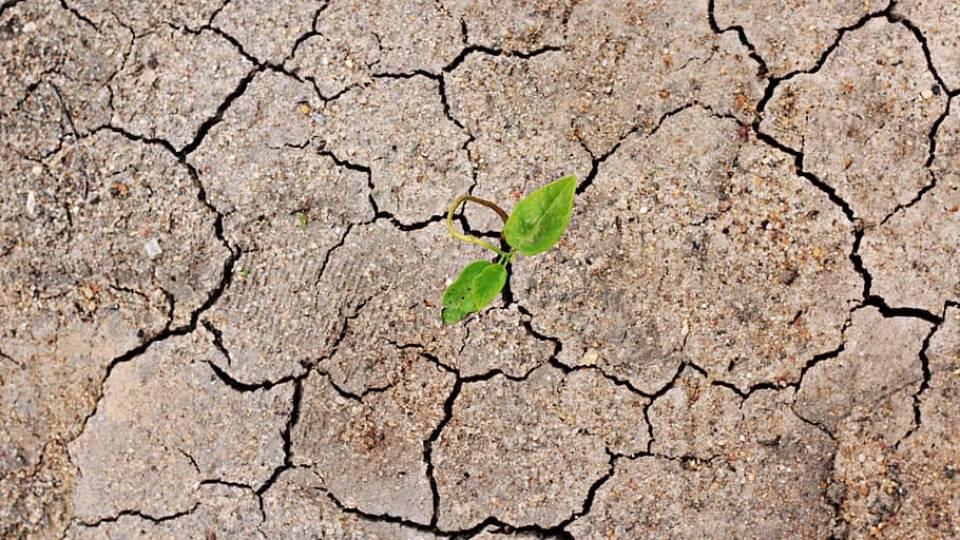 El suelo y los estudios ambientales