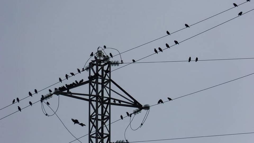 Aves y tendidos eléctricos