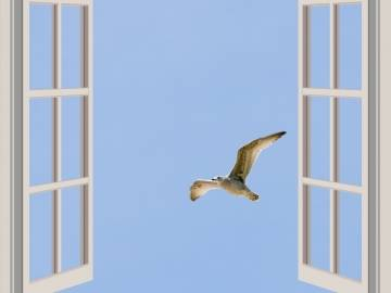Biodiversidad urbana: colisión de aves contra las ventanas de edificios