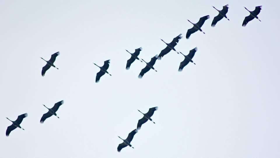 La brújula de las aves