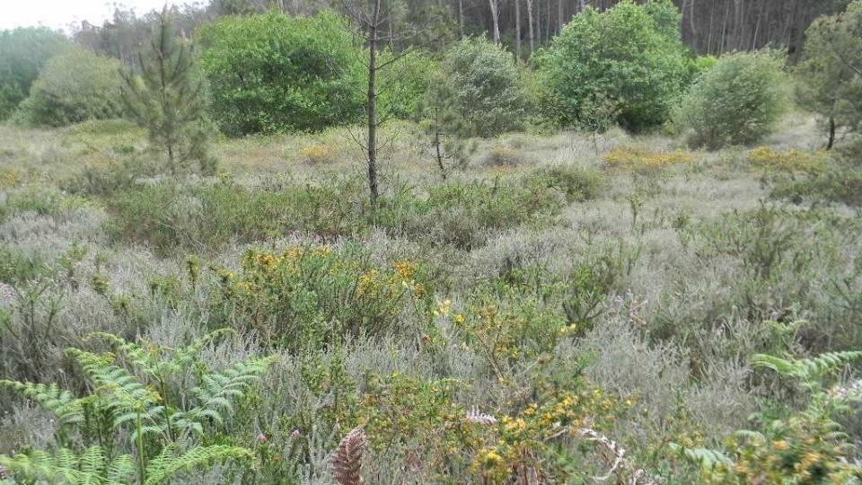 Breves monografías sobre el medio natural del NW de España (I): brezales húmedos atlánticos