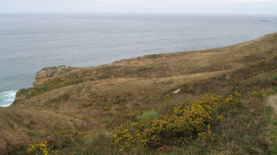 Breves monografías sobre el medio natural del NW de España (II): Brezales secos atlánticos costeros de Erica vagans