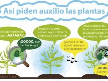 https://elodiebrans.wordpress.com/2014/03/19/de-que-hablan-las-plantas-cuando-no-las-escuchamos