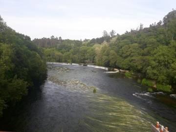 Presencia de algas en la capa superficial del río Tambre debido a la eutrofización