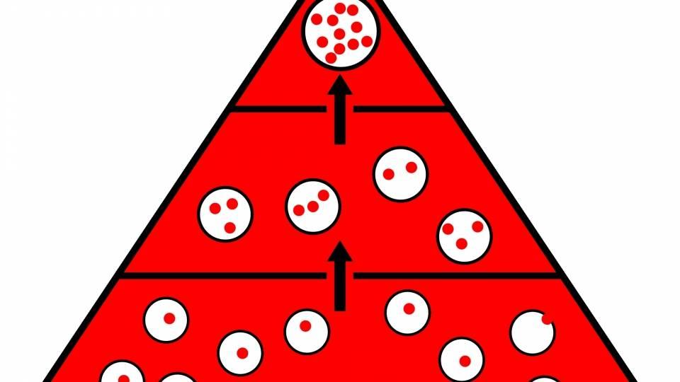 Bioamplificación a lo largo de la pirámide trófica