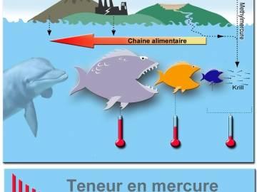 Bioamplificación del metilmercurio