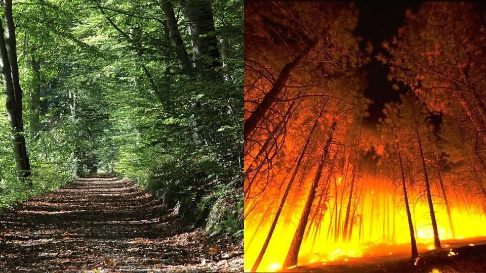 Bosque de frondosas e incendio en una masa monoespecífica de pinos