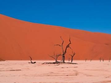 Día Mundial por la Lucha contra la Desertificación y la Sequía